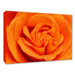 Orange Rose Flower Wall Picture Canvas Print